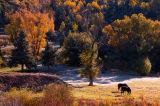 Backlit Pasture
