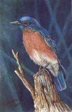 bluebird SOLD.jpg