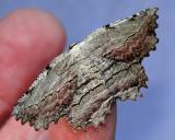 Wildlife/Moths & Butterflies