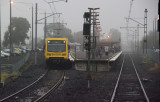 Foggy Lalor