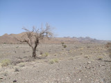 Lone Tree Hajar Mountains.jpg