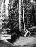 Grandpap chased by a bear
