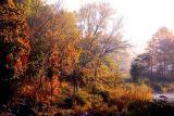 Fall Morning # 21