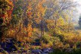 Fall Morning # 22