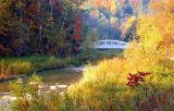 Fall Morning # 24