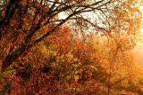 Fall Morning # 25