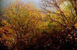 Fall Morning # 26