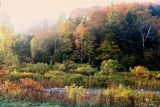 Fall Morning # 28