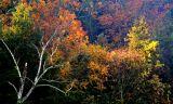 Fall Morning # 29