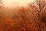 Fall Morning # 31