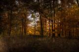 East Woods *.jpg