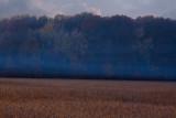 Soy Bean Field *.jpg