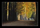 Versailles gardens (EPO_5653)