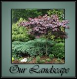 our_landscape