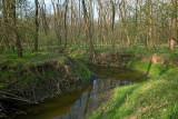 Flood plain forest with European ash jesenov poplavni gozd_MG_6420-1.jpg