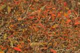 Autumn leafs jesensko listje_MG_2188-11.jpg