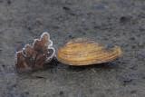 Shell �koljka_MG_3111-1.jpg