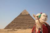 Pyramid and camel piramida in kamela_MG_3698-11.jpg