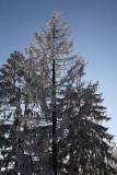 Snow on the trees sneg na drevju_MG_1006-1.jpg