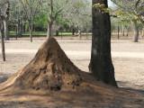 serious termites