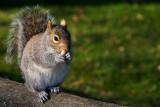 Squirrel, Nothe Gardens, Weymouth
