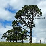 Trees and tower, Cotehele, Cornwall