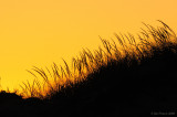 _NW81869 Dunes at Sunset