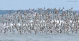 _NW82460 Mixed Flock in Flight