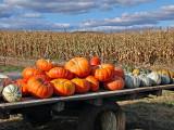 Shenandoah Valley: Sign of the season