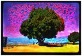 Toxic sky and tree