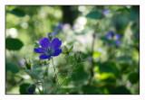Mountain flowers 2