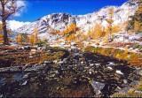 Creek Of Golden Needles Through The Enchantments