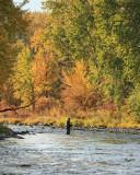 Steelhead Fishing OPen On Lower Entiat With WOnderful Fall Foilage