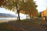 Fall Leaves ALong Columbia At Entiat City Park Campground