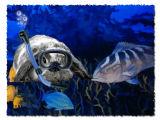 The Scuba Diver - Greg