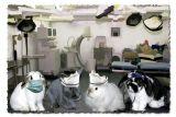 Greys Anatomy  -  Dr. Carter McSteamy, Bella - Nurse Wratchet, Bun Bun Foster, Nurse Foster, Dr. Binks McDreamy