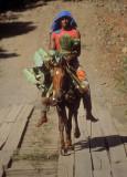 FIJI: Lone horseman, Wainibuka River, Viti Levu