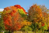 Peak of Fall-2008**BEST VIEWED IN LARGE**