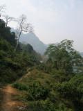 The jungle track, heading back towards village