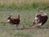 Maasai Mara - Bateleur Camp - May 30, 2009