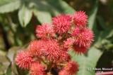 Flower - 056a.JPG