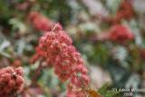 Flower - 056b.JPG