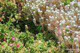 Flower - 061.JPG