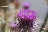 Flower 050.JPG