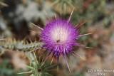 Flower 051.JPG