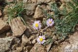 Flower 054 - Tiny.JPG