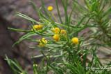 Flower 055 - Tiny.JPG