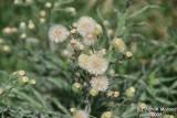 Flower 056 - Tiny.JPG