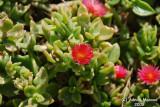 Flower 058 - Tiny.JPG