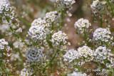 Flower 059 - Tiny.JPG
